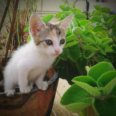 🐈Daisy gonna sit to **it!🐱 Pets Outdoors Pots Plant