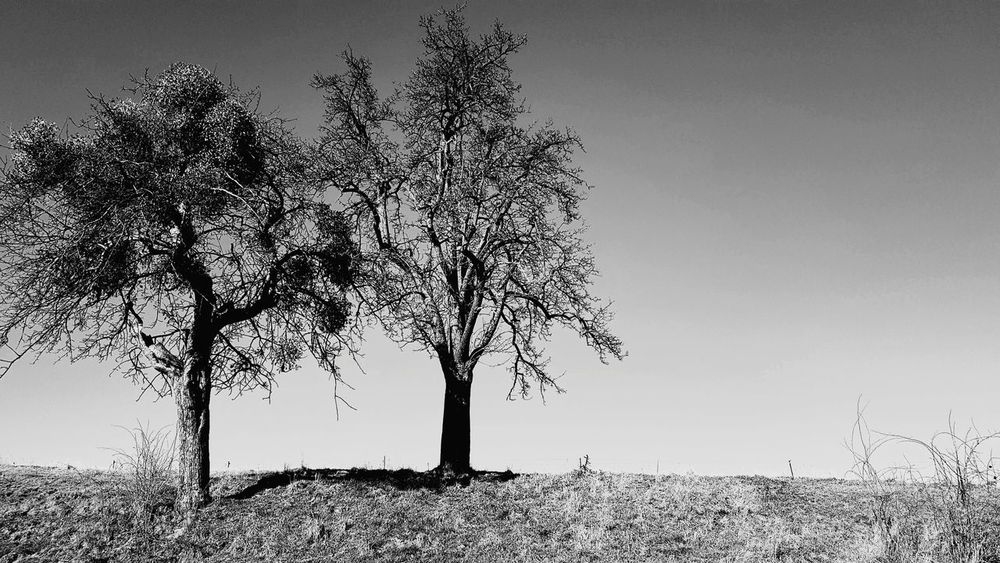 EyeEm Best Shots EyeEm Nature Lover Village Life Agriculture Way To Go Home Trees Gassi Gehen Blackandwhite Photography Black And White EyeEmNewHere Tree No People Nature Outdoors Landscape Beauty In Nature Rural Scene Sky Pixelated Day Close-up