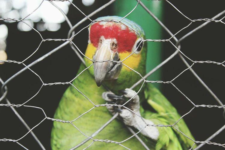 Goodbye my friend Cotorrito Zoo Colors