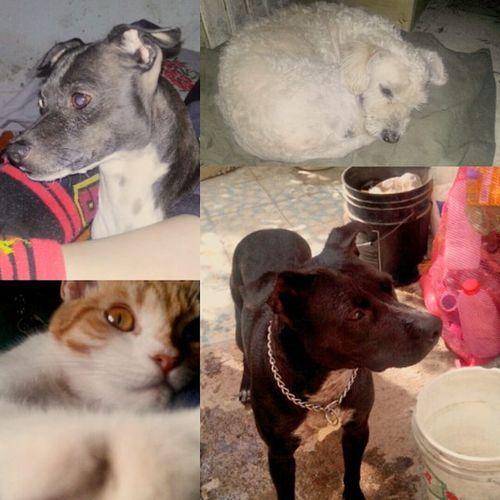 FelizDIa Internacional de los Mascotas and Animales 🐶🐺🐱🐭🐹🐰🐼🐰🐢🐵🐴🐨🐻 La Yossi Daysi Luna Jonasa 🐺