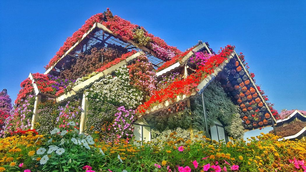 Miles Away Dubai❤ Growth Flower Miracle Garden Architecture Beauty In Nature Nature