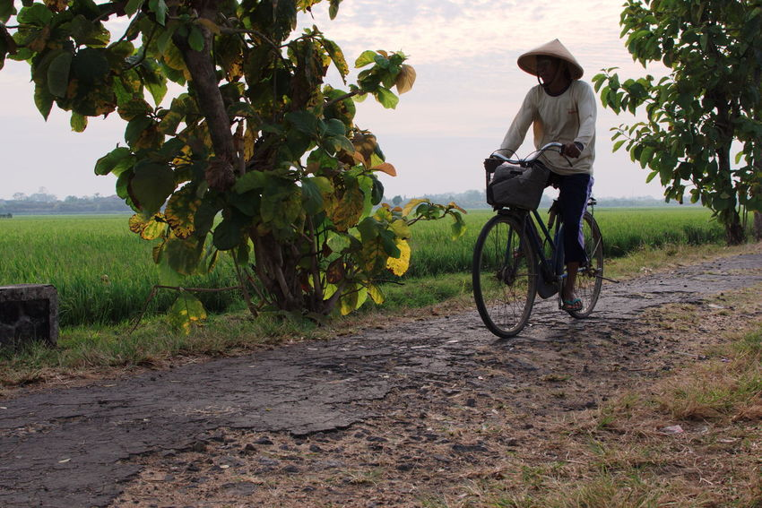 Bicycle Cycling Day Field Fruit Full Length Grass Growth Leisure Activity Lifestyles Nature One Person Outdoors People Real People Road Rural Scene Sky Streetphotography Transportation Tree Young Adult Young Women