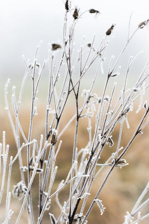 Frozen Bavaria Bill Ryker EyeEm Nature Lover EyeEm Gallery Frost Frozen Flowers Hoarfrost Icey MA Eibl Plant Winter Beauty In Nature Close-up Crystal Eye4photography  Focus On Foreground Frosty Grass Growth Ice Crystals Nature Plant Snow Tranquility Winter Trees