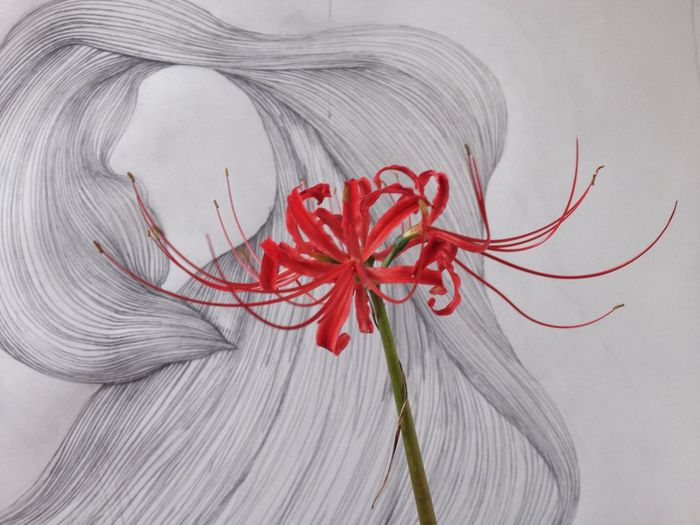 Yesterday, I spotted the first spider lily blossom. The drawing in back is of the flower and is in progress. EyeEm Nature Lover Flowers Drawing ArtWork