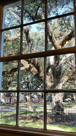 Once upon a time here in the South Capturing History Plantation Live Oak On A Tour Spanish Moss Trees Beauty Country Southern Charm Amancipation Proclamation