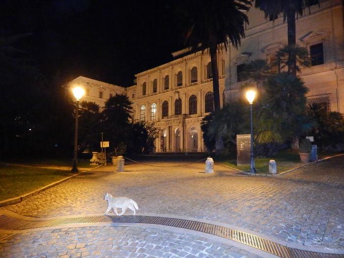 Architecture Moving Around Rome Nightphotography Rome Cat♡ Lightpoles Museum Night View Popular Photos HUAWEI Photo Award: After Dark
