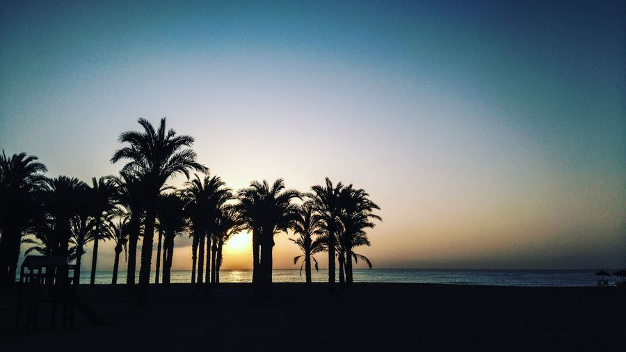 Silhouette Of Palm Trees On Beach At Sunset