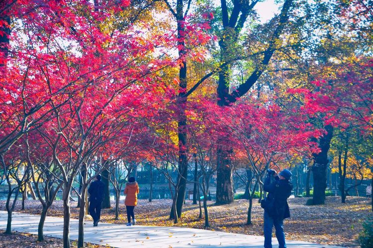 Season Greetings Colourful Nature Park Tree Autumn Nature Beauty In Nature Branch Real People
