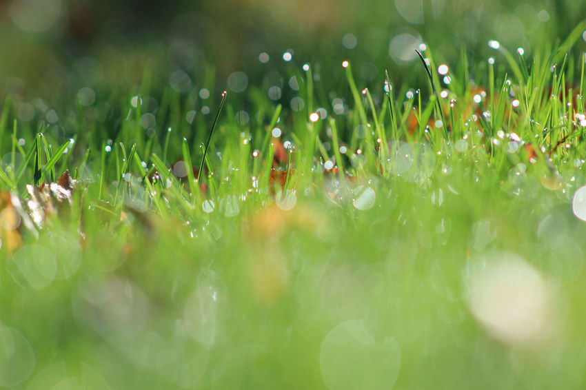 Beauty In Nature Close-up Day Drop Flower Fragility Freshness Grass Green Color Growth Nature No People Outdoors Plant Selective Focus Water