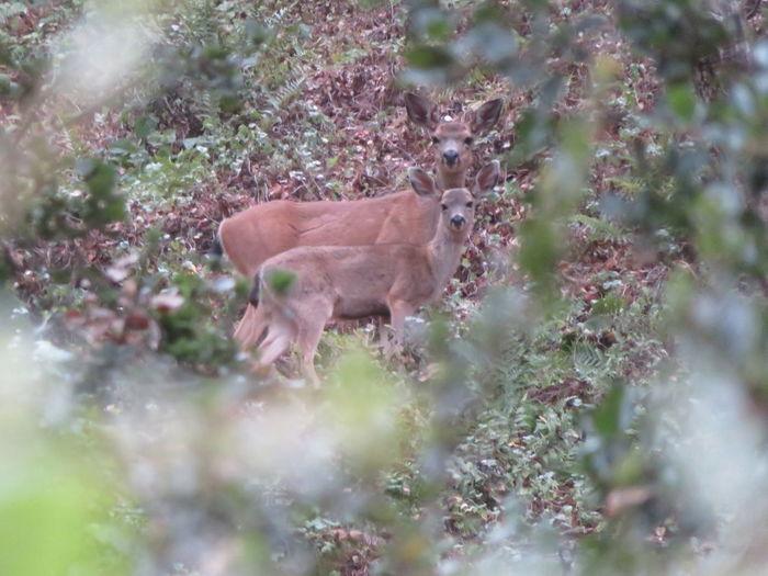 View of deer standing on field