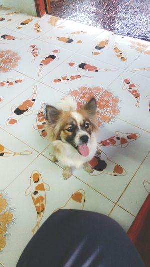 Taking Photos 😍😙😙😙😍😍😙😻😻😻 Enjoying Life I Love My Dogs her name is nano😘😘😘👏👏👏