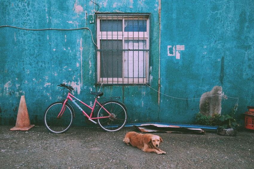 老家附近 Dog Mobilephotography Nexus5x Nexus 5x Old House Nexusphotography Nexus