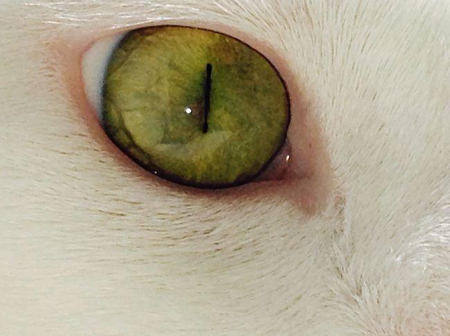 Occhiprofondi Cats Amoremio
