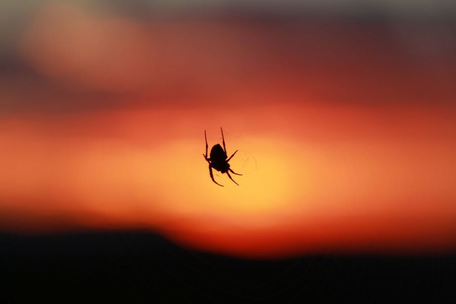 Insect Animal Themes Nature Close-up Animals In The Wild Sunset One Animal Outdoors No People Silhouette Beauty In Nature Day Photography Themes Color Low Angle View Sky Travel Adventure