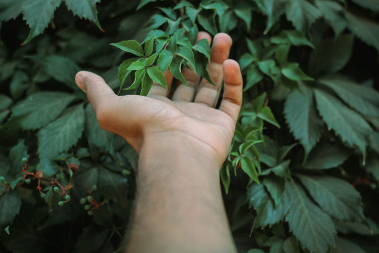 Close-up of hand touching leaves