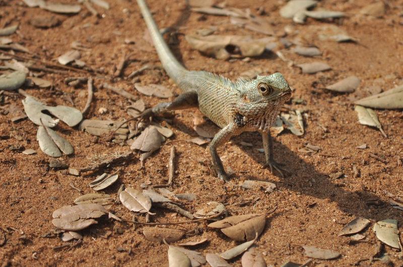 High angle view of lizard on field