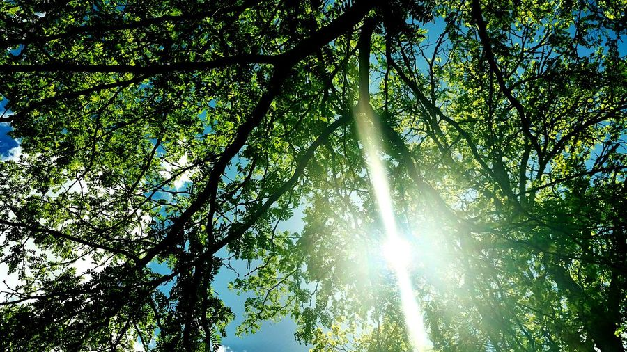 new growth and new hope New Beginings Tree Branch Forest Sunlight Leaf Sky Green Color