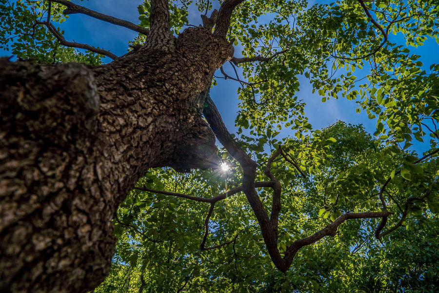 EyeEm Nature Lover EyeEmNewHere Beauty In Nature Branch Clear Sky Day Directly Below Forest Green Color Growth Leaf Low Angle View Nature No People Outdoors Plant Plant Part Sky Street Streetphotography Sunlight Tranquility Tree Tree Canopy  Tree Trunk Trunk