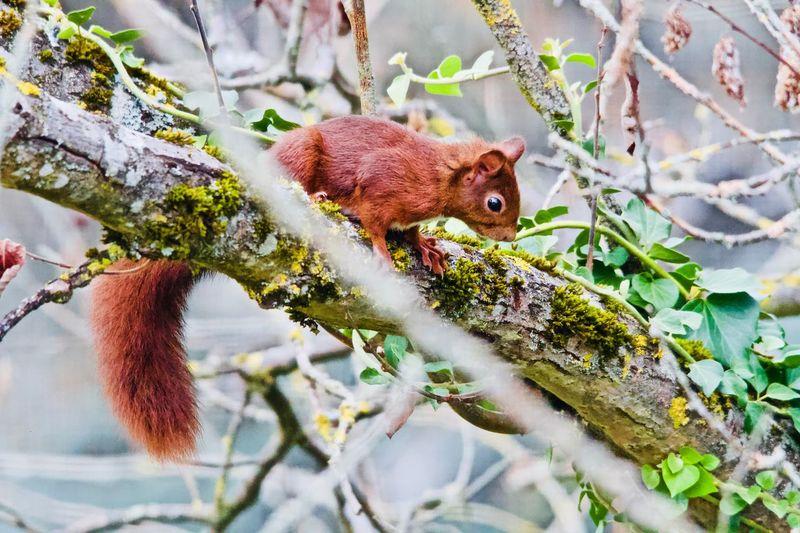 Animal Themes Animal One Animal Animal Wildlife Mammal Rodent Animals In The Wild Nature Squirrel