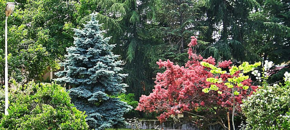 University Campus Trees Colorful Claretred Blue Green Trabzon Ktu Open Edit Nature Photography