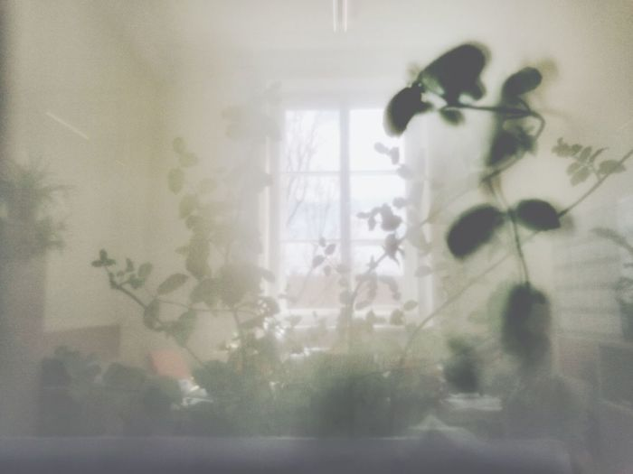 Window Frosted Glass Indoors  Mgła First Eyeem Photo