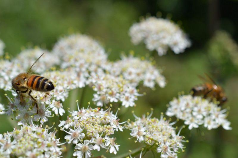 Micro Nature EyeEm Nature Lover Summertime Honeybees
