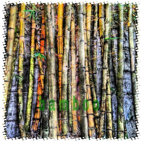 bamboo Simplicity Sweet Simplicity