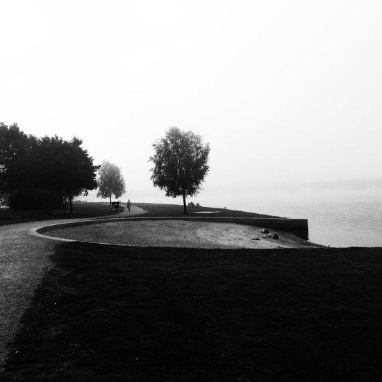 Foggy Fall Morning NEM Black&white