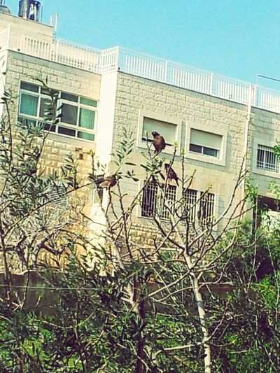صباح الخير Good Morning Palestine Jerusalem Photography Photo تصويري