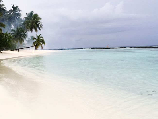 Beach life Palm Tree Maldivesbeach Island Life Beach Paradise Beach Paradise Maldive Maldives EyeEm Selects Sea Beach Sky Water Land Beauty In Nature Plant Sand Tree Tropical Climate Nature Tranquility Palm Tree Scenics - Nature