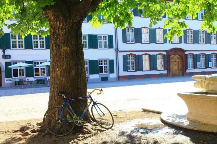 Taking Photos EyeEm Best Shots Basel Bicycle Sunset Hugging A Tree Photooftheday Colorful