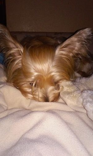 Quinn Bear Cute Pets 🐶