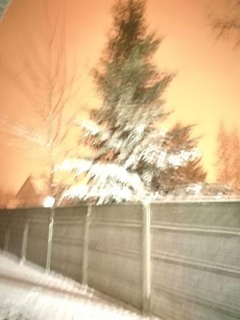 Tree Winter Sunset Cold Temperature Sky