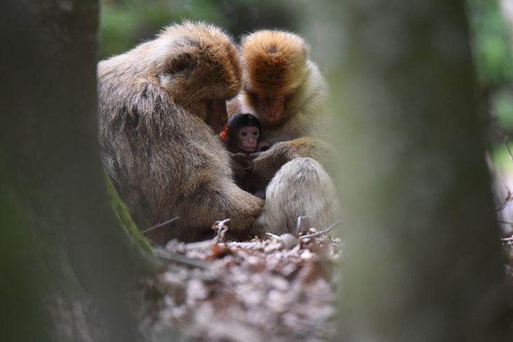 Monkey Family Animal Animals Animals In The Wild Babies Baby Day Family Forest Hug Mammal Monkey Monkeys Nature Nature Tree Wild Wildlife