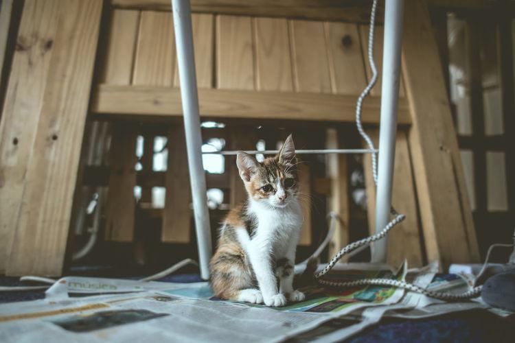 Cat Cub Sitting On Newspaper