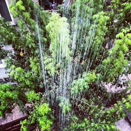 yağmurun fotoğrafı...