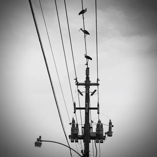 EyeEm Best Shots Eyemphotography Urban Geometry Beauty In Nature Black And White Blackandwhite Sky Cable Low Angle View Connection Electricity  Technology Nature