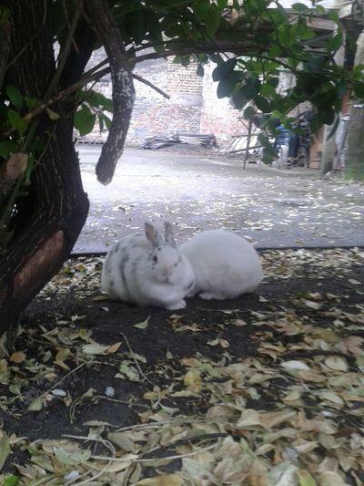 Minouche et Mili