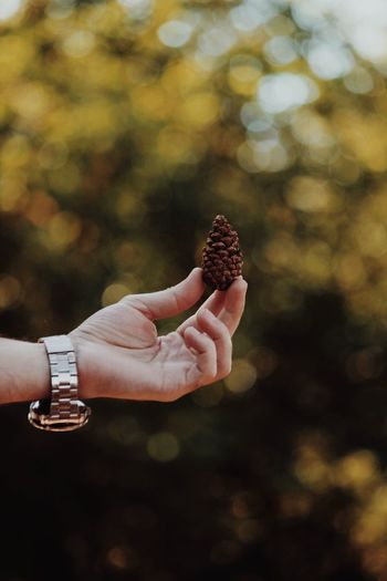 Close-up of hand holding pine cone against blurred background
