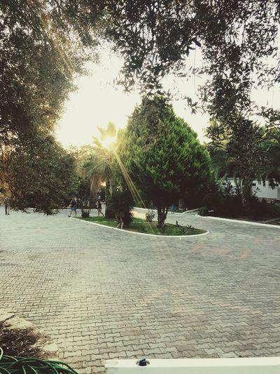 Tree Sunny