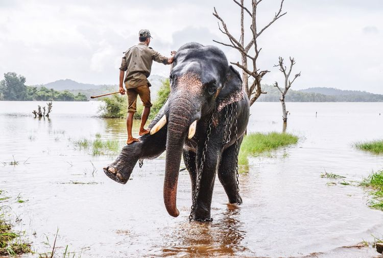 Miles Away River One Animal Elephant Indian Elephant Lifestyles Real People Outdoors Sky Mammal Nature Full Length Domestic Animals Animal Wildlife Water Men Animals In The Wild Day One Person Beauty In Nature People Place Of Heart 50 Ways Of Seeing: Gratitude