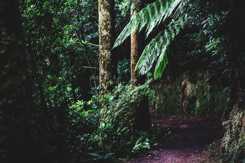 The walking trail in the jungle of Sao Miguel/ Azores Moody Moody Weather Wanderlust Travel Photography Travel Destinations Traveling Tranquility Jungle Tree Forestwalk Nature Hiking Plant Tree Growth No People Nature Day Green Color Outdoors Architecture Window Forest Land Branch Tree Trunk Beauty In Nature