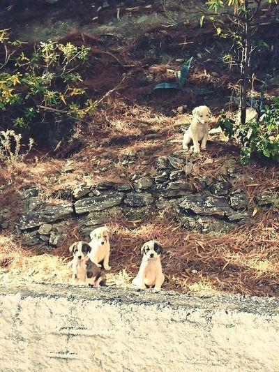 Puppy Bird Pets Dog Beach Sand Water Sunlight High Angle View Stray Animal