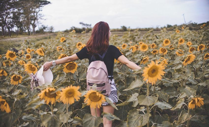 someday Sunflower Sunkissedskin #portrait #portraitphotography #EyeEmNewHere #Instagram #photography #travel Instagood #philippines Picture Mountain For Sale Life Events Lifeisbeautiful Lifephotography Lifestyles Lifestyle Nature Instamood Flower Young Women Females Beauty Rural Scene Women Autumn Sunset Field Blooming In Bloom