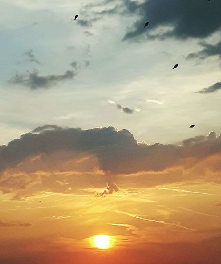 birds on cloudy sunset sky Four 4 Sun Sunset Clouds Vivid Colours  Peaceful Nature Beauty In Nature Wonderful Bird Spread Wings Flying Sunset Mid-air Flock Of Birds Sky Only Shining Sunbeam Dramatic Sky Atmospheric Mood