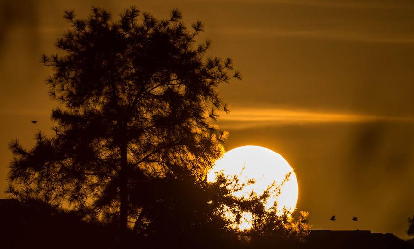 Too hot Blazing Sunrise Golden Golden Moment Heat Horizon Nature Sun Trees Nritzz