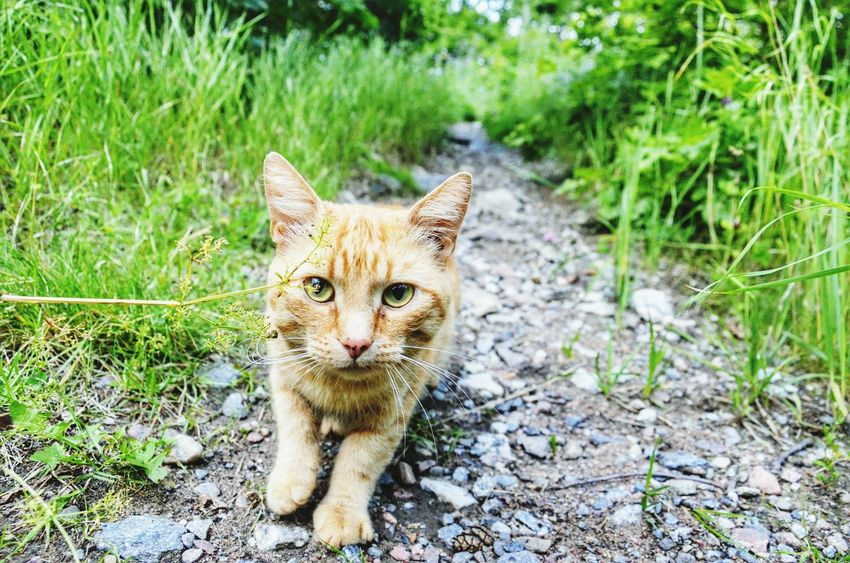. ☺ Taking Photos Nature. ☺ Cat♡ Enjoying Life