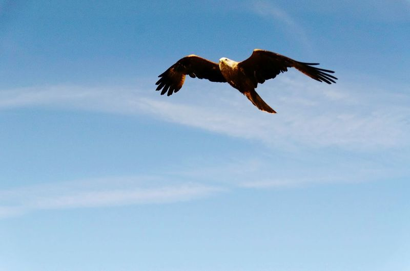 Low angle view of eagle flying mid air