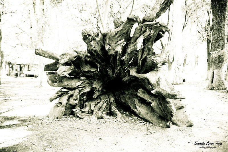 PUERTA AL INFRAMUNDO Treinta_cero_tres Photographer Blancoynegro Blackandwhite Tree Dead Plant Outdoors Nature Day