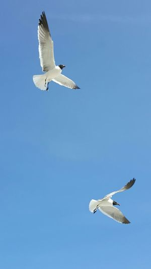 Teamwork Flight Flying Flying High Flying Away Flying Bird Soaring SOAR HIGH Team Soaring Birds Soaring Up Above Seagulls In Flight